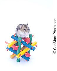 dwarf hamster on toy white background