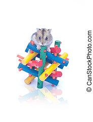 dwarf hamster on toy white background