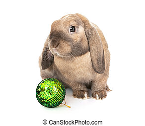 Dwarf rabbit with a Christmas toy.