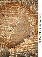 dwarsdoorsnede, van, oude boom, met, jaarlijks, ringen