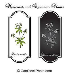 Dyer s madder rubia tinctorum , medicinal plant. Hand drawn ...