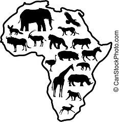 dyr, afrika