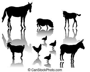dyr, agerjord