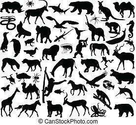 dyr, samling