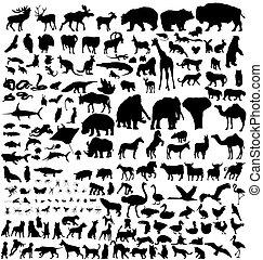 dyr, silhuetter, samling