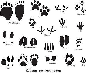 dyr, trails, hos, titel