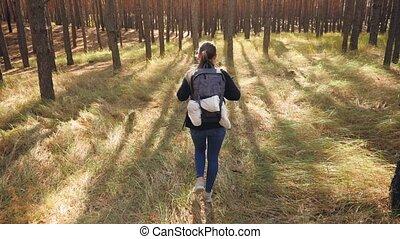 dzień, antena, hiking, jasny, przelotny, video, młody, aparat fotograficzny, pieszy, las, kobieta, wycieczkowicz, 4k, słoneczny, za