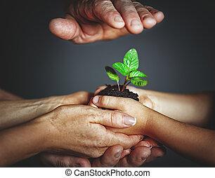 dziecko, pojęcie, kiełek, siła robocza, rodzina, parenting., roślina, ojciec, zielony, dzierżawa, macierz, uprzejmość