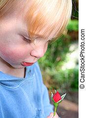 dziecko, róża, kwiat