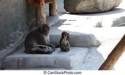 dziecko, wziąć, butelka, małpa