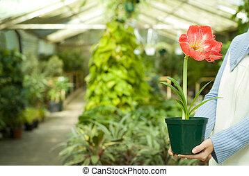 dzierżawa, wybrany, roślina, w, siła robocza