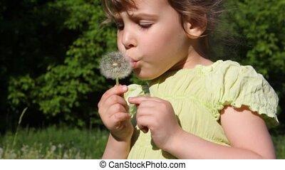 dziewczyna, kwiat, sapie, łąka