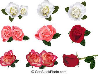dziewięć, róże, piękny