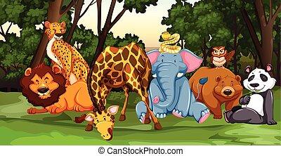 dziki, żyjący, zwierzęta, dżungla