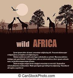 dziki, afisz, afryka