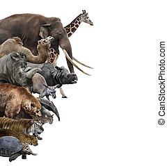 dziki, collage, zwierzęta