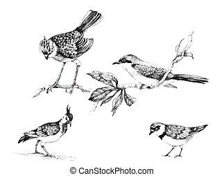 dziki, egzotyczny, komplet, ptaszki, illustration.