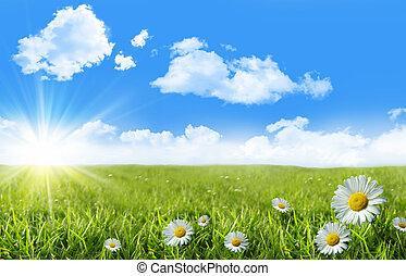 dziki, margerytki, w, przedimek określony przed rzeczownikami, trawa, z, niejaki, błękitne niebo