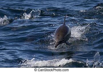 dziki, morze, delfiny