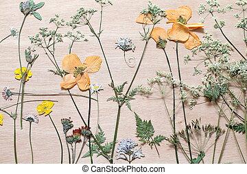 dziki, prasowany, kwiaty