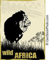 dziki, wizerunek, afryka, lew