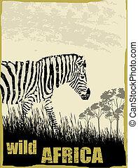 dziki, wizerunek, afryka, zebra