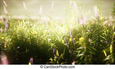 dzikie kwiecie, pole