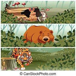 dzikie zwierzęta, dżungla
