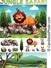 dzikie zwierzęta, dżungla, safari