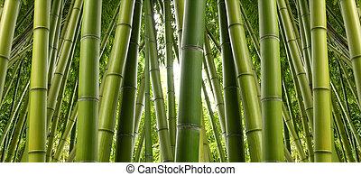 dzsungel, bambusz