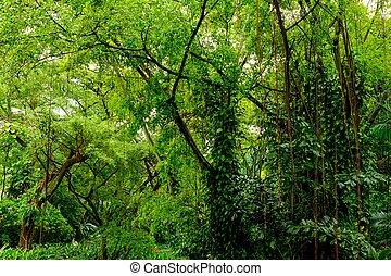dzsungel, buja, zöld, tropikus
