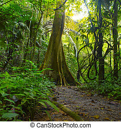 dzsungel, erdő, noha, tropikus, fa., kaland, háttér