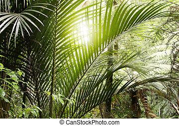 dzsungel, fény