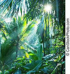 dzsungel