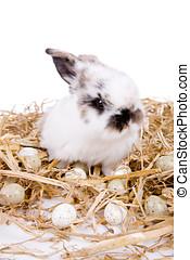 Eaaster bunny