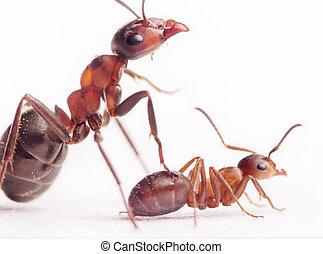 each new born ant has 2-3 nurses and mentors