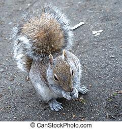 Eager squirrel