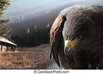 Eagle against the mountains