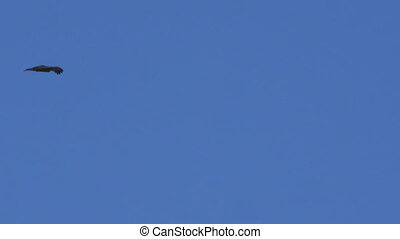 Eagle and blue sky shot - A full shot of a clouds and blue...
