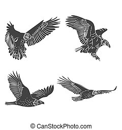 eagle and falcon silhouettes set.