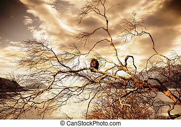 Eagle at Sunset