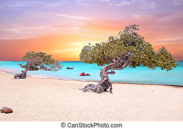 Eagle beach on Aruba island in the Caribbean Sea at sunset