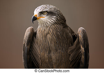eagle bird animal portrait