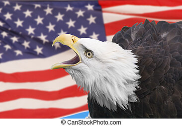 Eagle composite - Bald eagle and american flag