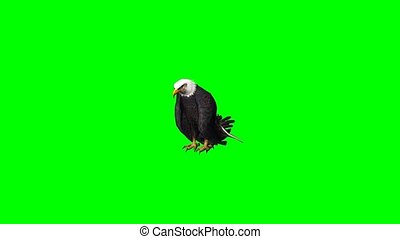 eagle eats - green screen