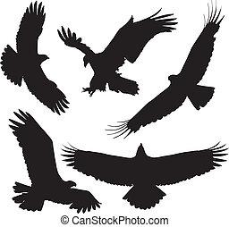 Eagle Silhouette on white background