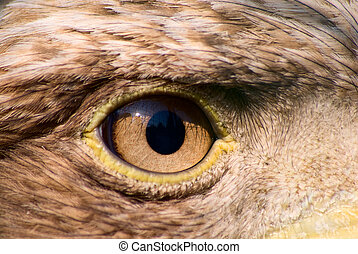 Eagle eye - Closeup of an eagle (Aquila sp.) eye