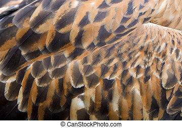 Eagle feather texture