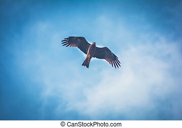 Eagle flying high in the sky