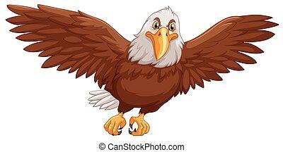 Eagle flying on white background